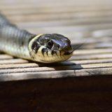 夢占い-蛇の夢は何を意味するのか?