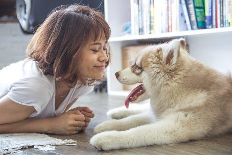 夢占いと犬