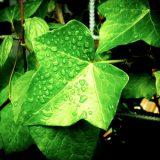 観葉植物で風水の運気を上げるには?