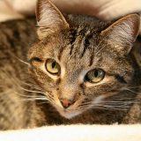 猫が見ているスピリチュアルな世界について