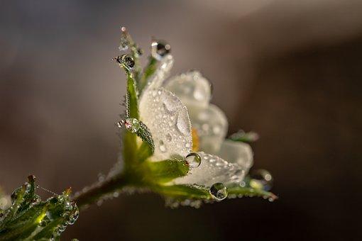 驚異の自然療法・フラワーレメディをご存知でしょうか?