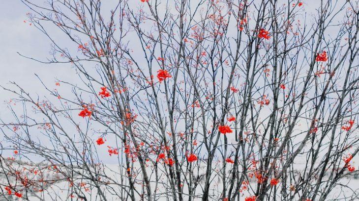 3月は梅の見頃!梅の花言葉や風水的な意味を紹介