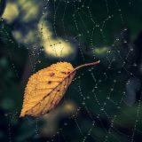 夢占い-蜘蛛(クモ)の夢は何を意味するのか?
