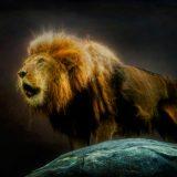 【2021年】毎年夏に開く「ライオンズゲート」とは?その意味と過ごし方について