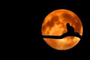 【仕事運がUP】9月の満月、新月の過ごし方を紹介