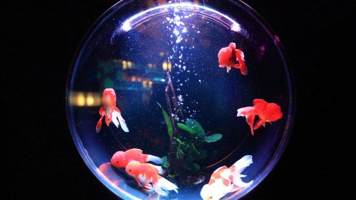 暑い夏は家にアクアリウムを置いてはいかが?金運アップする水槽を置く方位・魚の種類