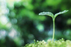 雨の日におすすめ!4つのヒーリング方法