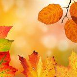 秋にちなんだお花や果物から運気が上がるおまじないとは?