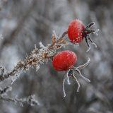 夢占い-寒い・冷たい夢は何を意味するのか?