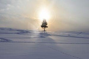冬至のスピリチュアル的意味と過ごし方【2020年12月21日】