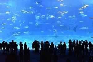 冬におすすめ!水族館デートのおすすめポイント&選び方を解説!