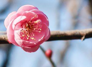 2021年の節分・立春はデトックス&結界力を高める!124年ぶりのスペシャルdays【2月2日・3日】