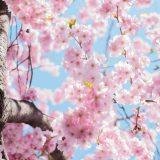 2021年春最新版!今行うべき開運アクション6選!春の行動で1年の幸福度が大きく変わる