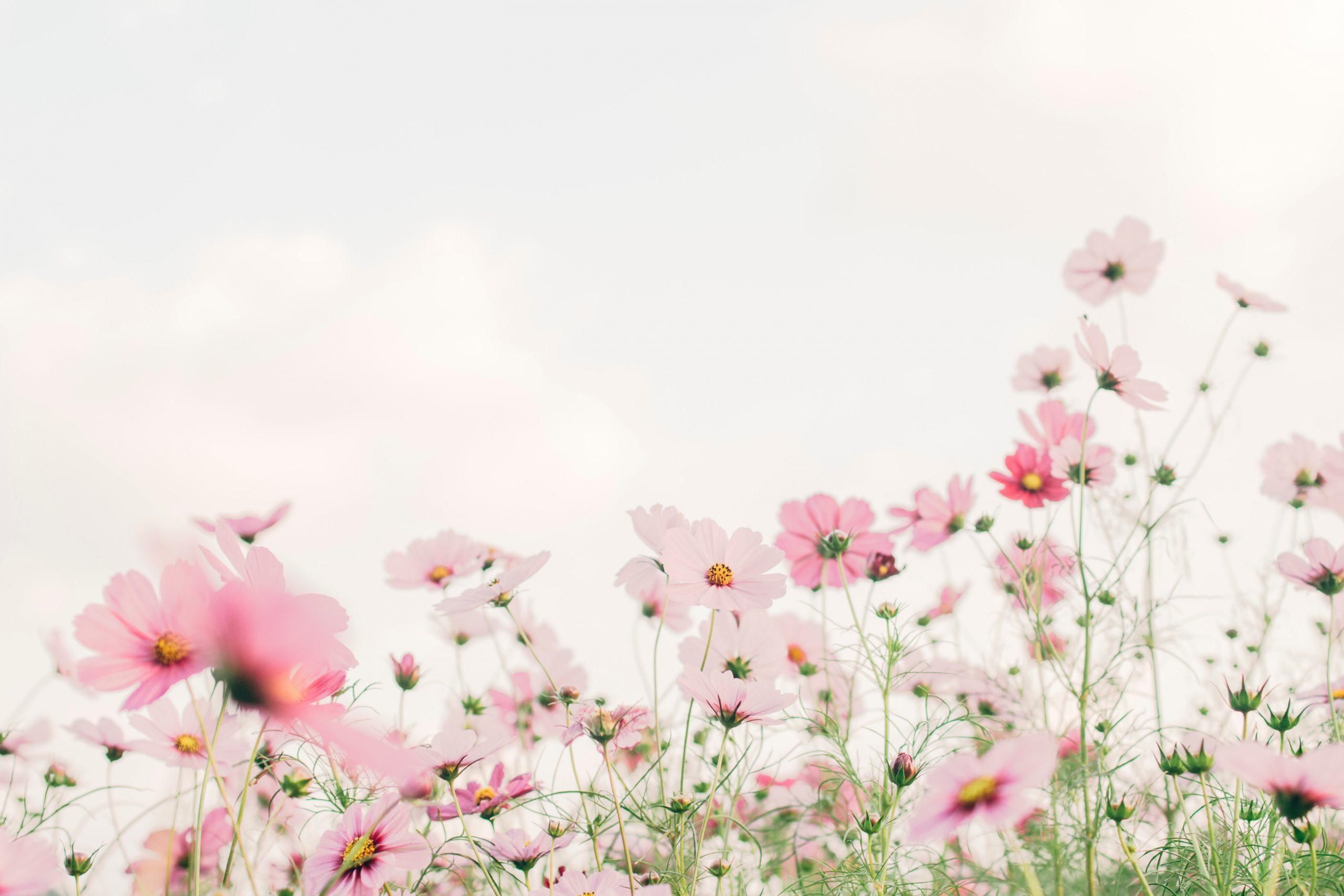 春は憂鬱な季節!?今すぐできる心の断捨離で運気アップ